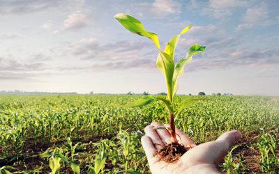 زنجیر واسطهگری بر گردن کشاورزی