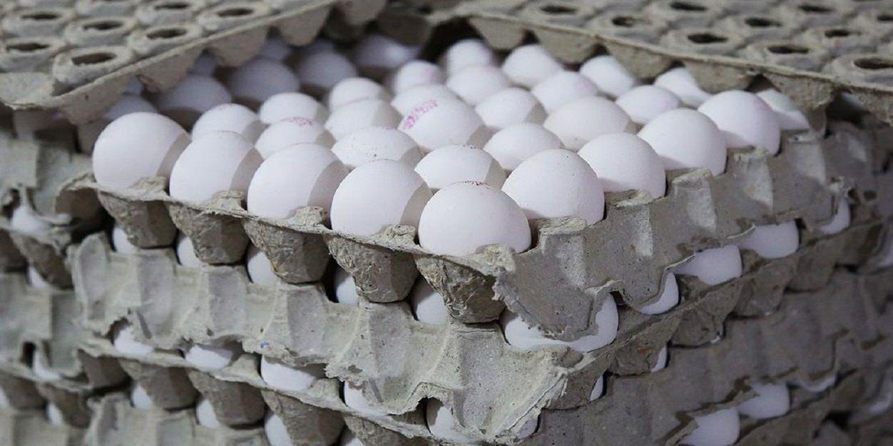 زیان ۷۰۰ تومانی مرغداران در فروش هر کیلو تخم مرغ