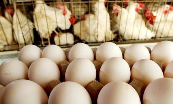 پیشبینی افزایش قیمت تخم مرغ در مرداد